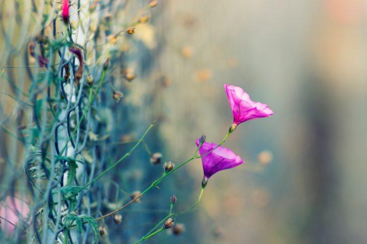 beautiful blooming garden of life