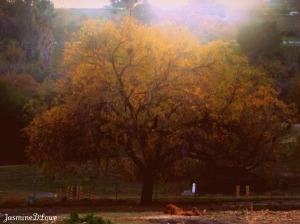 The Great Fall Tree