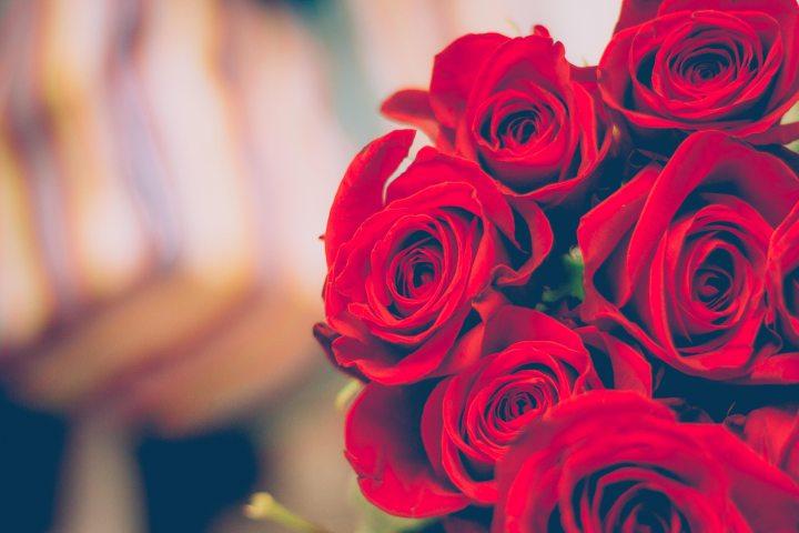 beautiful bloom of roses blooming